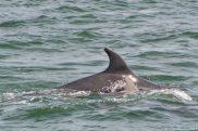 Irlande maman dauphin et son bébé